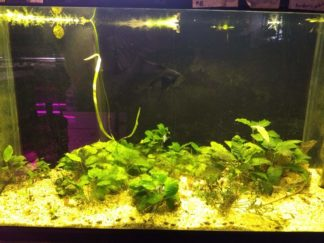 58 gallon planted tank